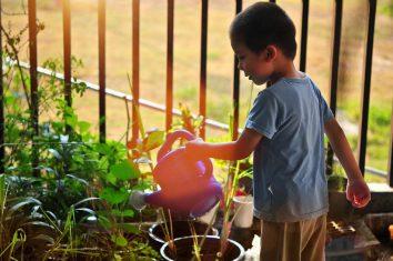 Eco orto alla scuola di Boltiere